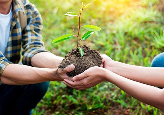 Mãos de um homem e uma mulher juntas plantando uma muda de árvore
